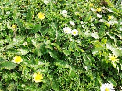 Fleurs-du-jardin